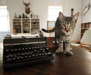 Hemingway House cat by EH typewriter